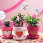 valentines day plants